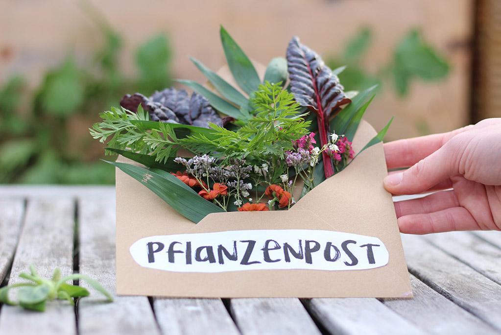 """online Magazin """"Pflanzenpost"""" mit Einpflanzhilfe zum Anbau von eigenem Gemüse aus dem Wachsenden Kalender"""