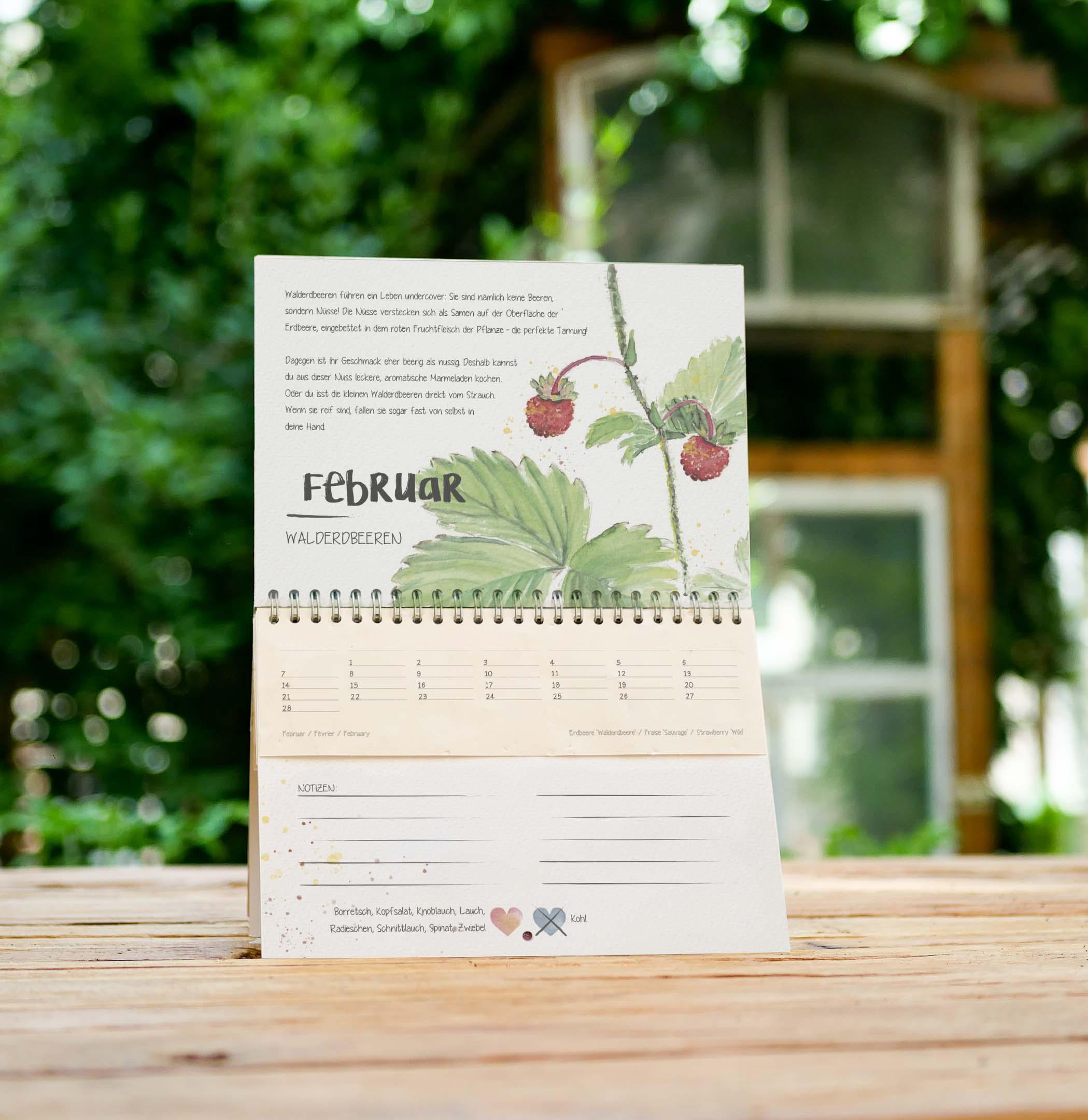 Januar Kalenderblatt im einpflanzbaren Kalender Tausendsassa zeitlos: samenfestes Bio-Saatgut für Endivie im Samenpapier
