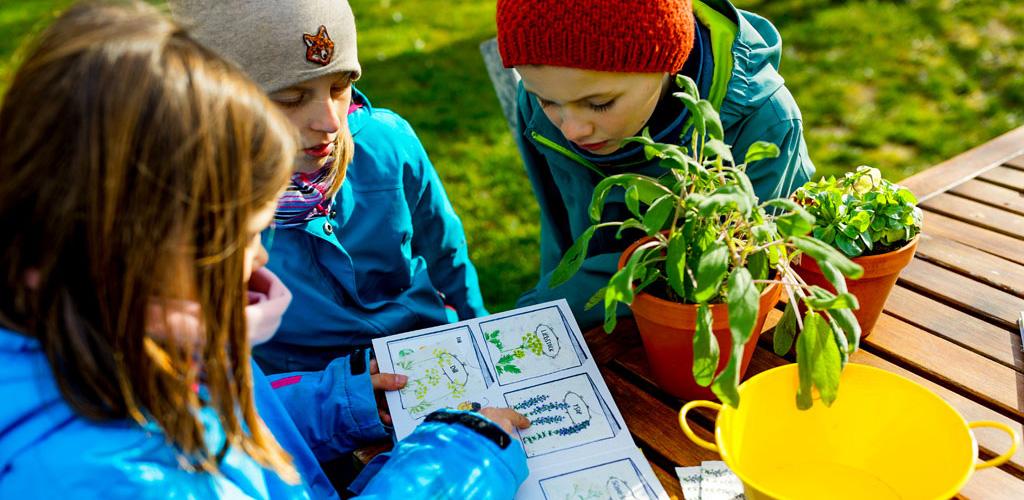 Kinder betrachten die Samenkarten aus Samenpapier im nachhaltigen Kinderbuch Emi Brillenbiene.