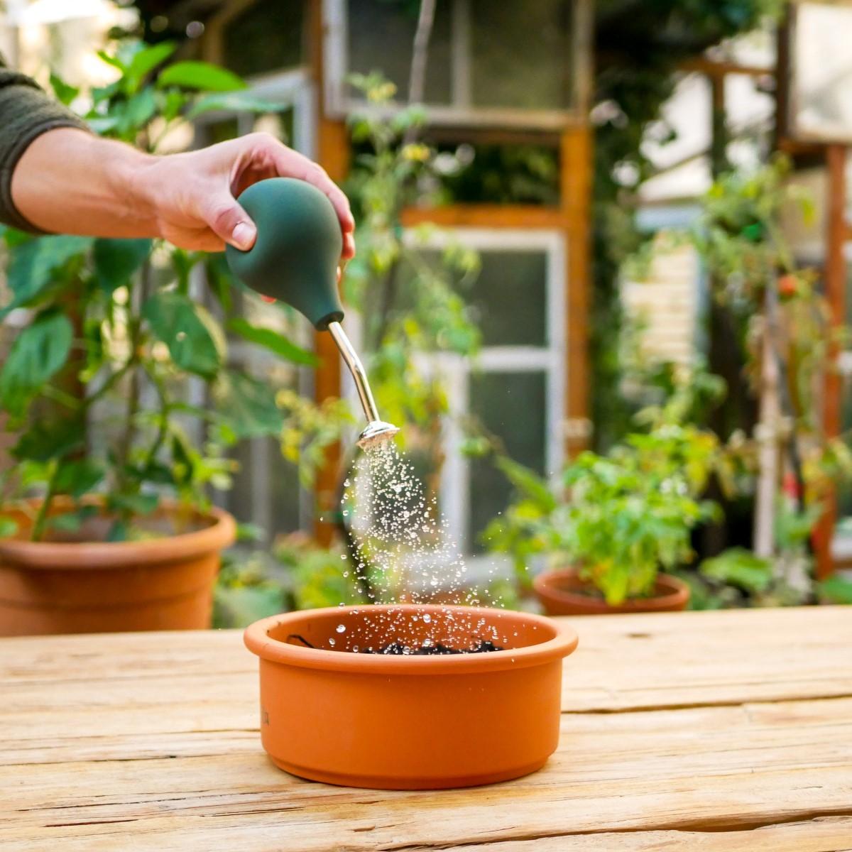 Ballbrause zum Gießen von Pflanzensetzlingen gießt Wasser über eine Anzuchtschale aus Ton