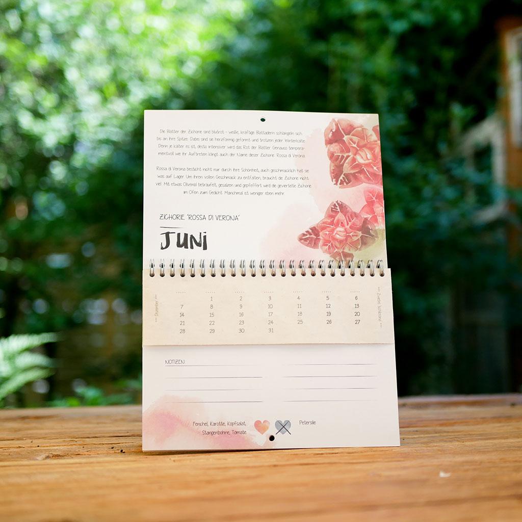 Juni Kalenderblatt im einpflanzbaren Kalender Vergessene Sorten zeitlos: samenfestes Bio-Saatgut für Zichorie im Samenpapier