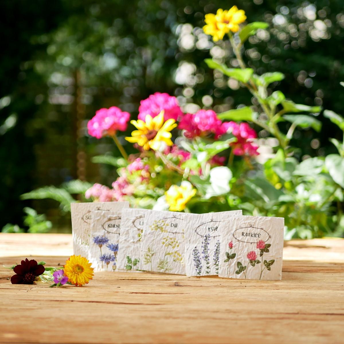 Samenpapier Karten für nachhaltiges Kinderbuch Emi Brillenbiene. Mit samenfestem Bio-Saatgut für bienenfreundlichen Blumen