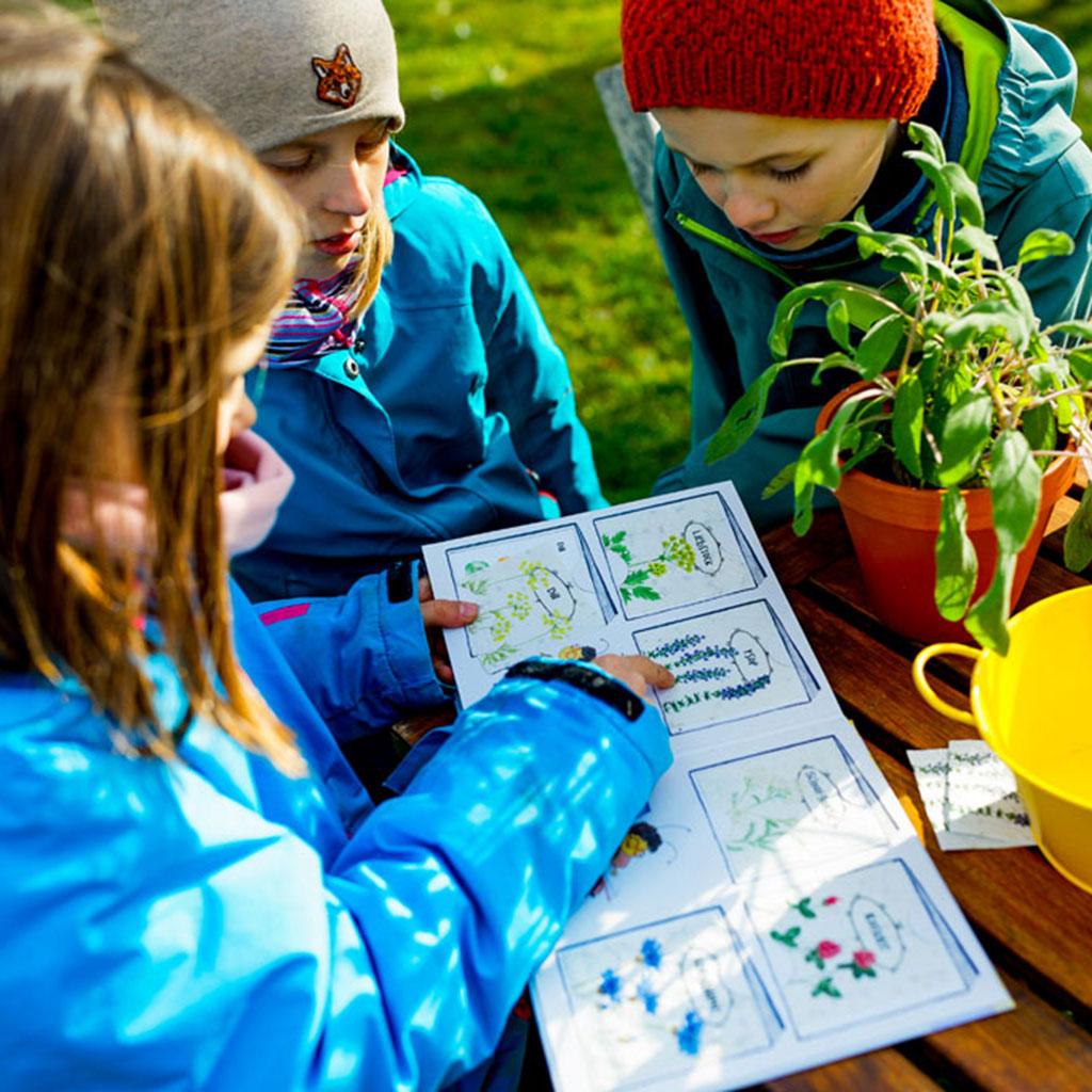 Kinder betrachten Samenpapier Karten mit Samen bienenfreundlicher Blumen in Kinderbuch Emi Brillenbiene