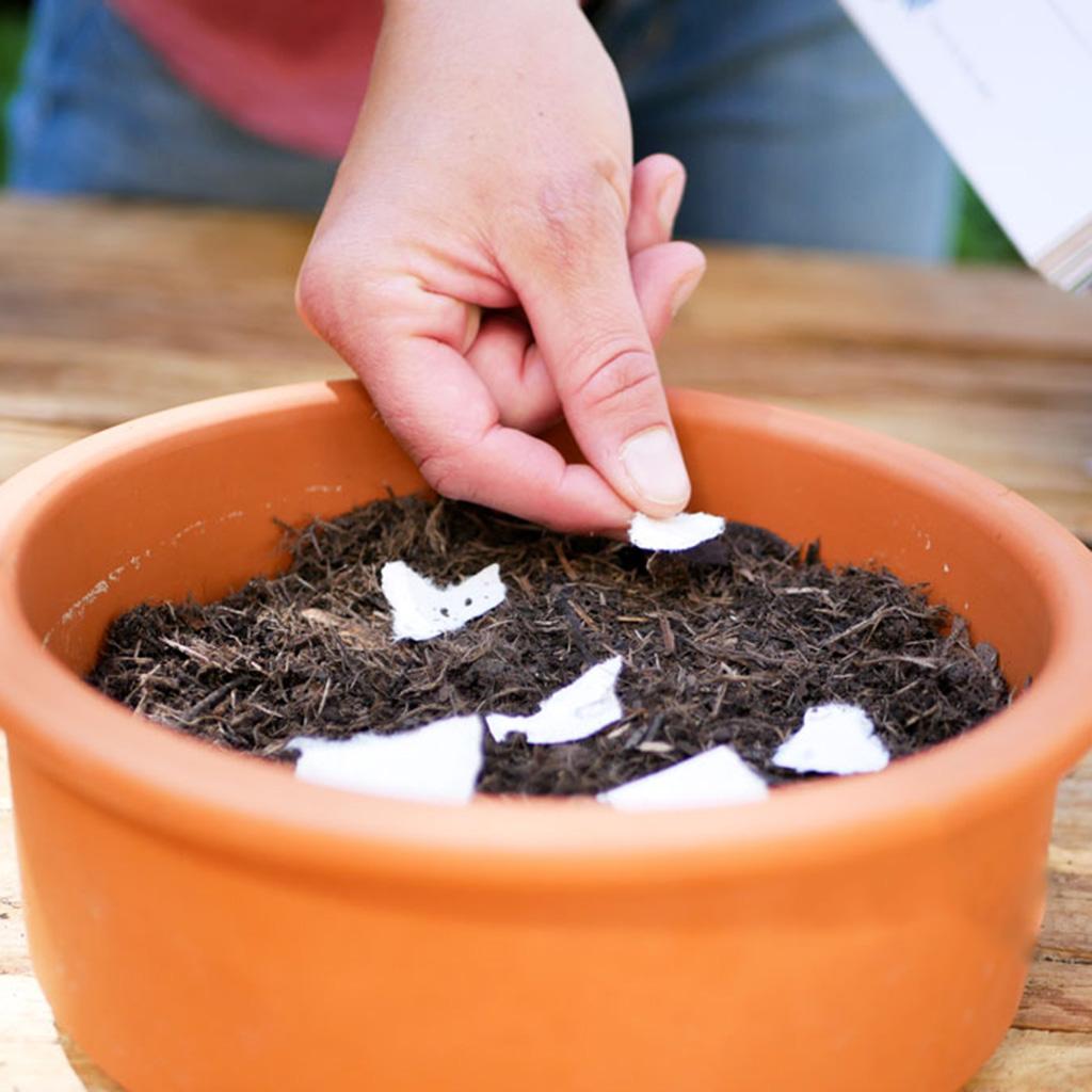 """Samenpapier aus dem einpflanzbaren Kalender """"Der Wachsende Kalender"""" wird in einen Topf mit Erde gepflanzt."""