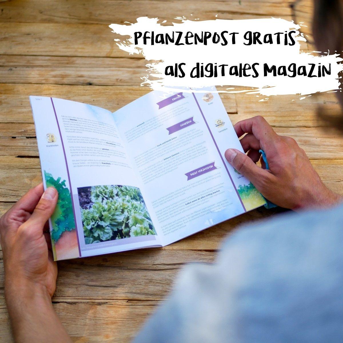 """Das digitale Magazin """"Pflanzenpost"""" von primoza als ausgedruckte Broschüre wird von einem Menschen an einem Tisch gelesen."""