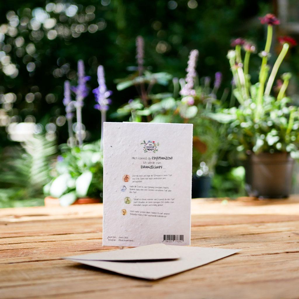Rückseite einpflanzbare Grußkarte aus Samenpapier. Klappkarte mit Umschlag aus Graspapier